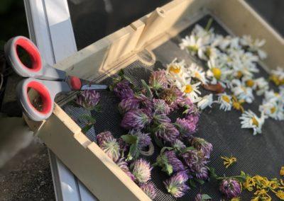 Chantal-Martel-Boutique-en-ligne-fait-au-Québec-Herboriste-Produits-Naturel